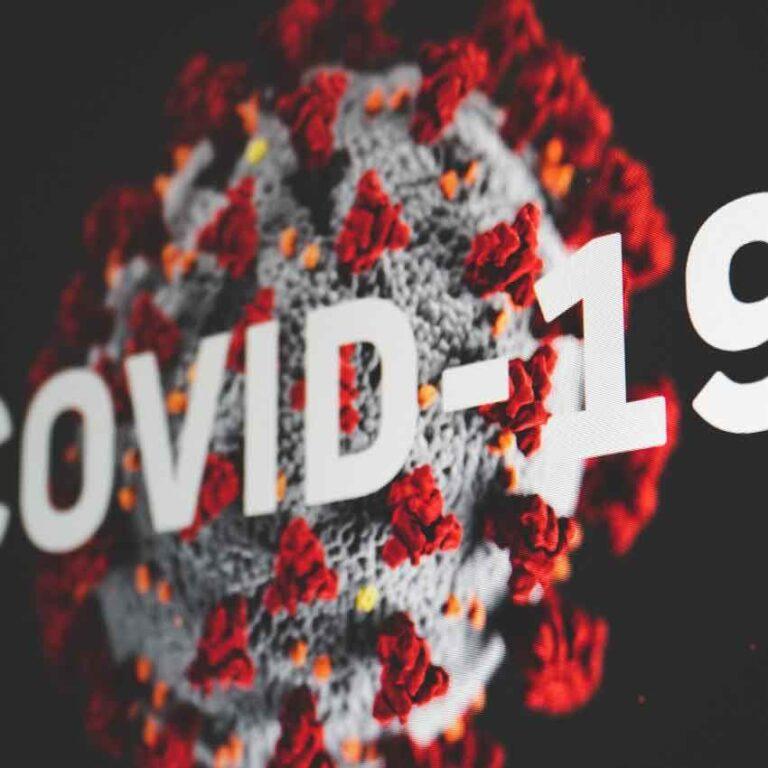 Dansk Varmblods Hingstekåring trodsede COVID-19