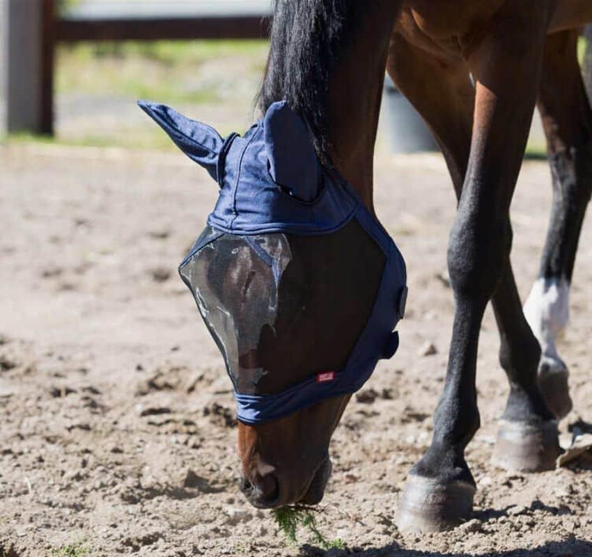 En fluemaske er et stykke udstyr, som hjælper med at holde fluer og andre insekter væk fra din hests øjne og andre sarte områder.