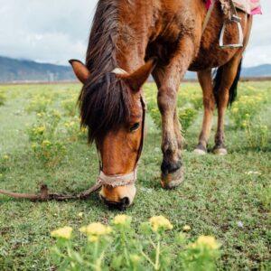 Hestefoder giver et mere fokuseret og transparent indhold af næringsstoffer i forhold til hø og wrap.