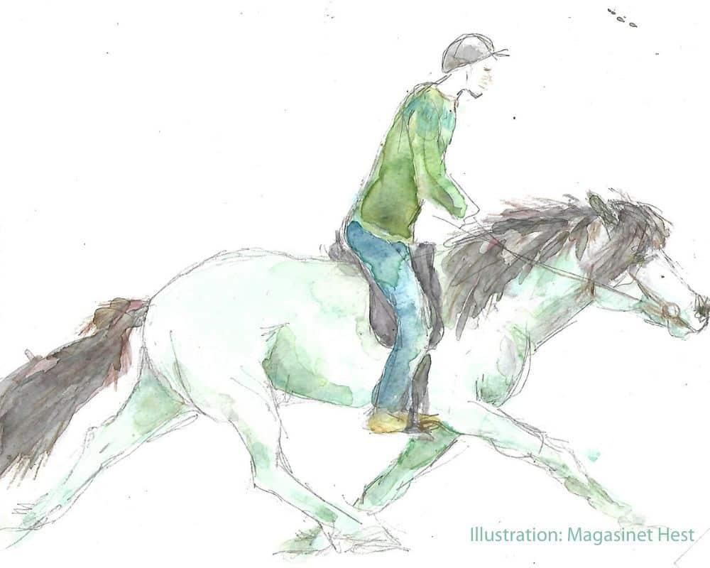 Islandsk hest gangarter 2