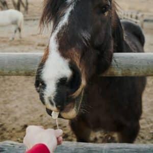 En sliksten er en ekstra godbid, spækfyldt med mineraler og næring til din hest.