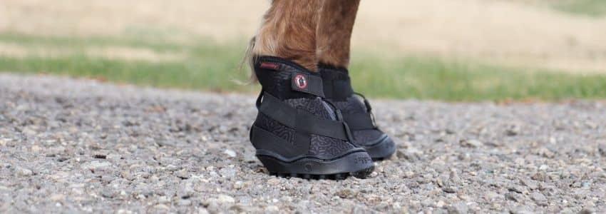 Sorte boots til heste