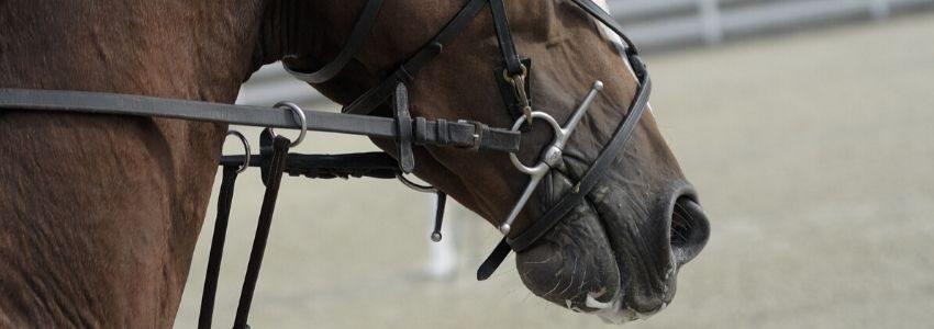 bid-til-hest-2
