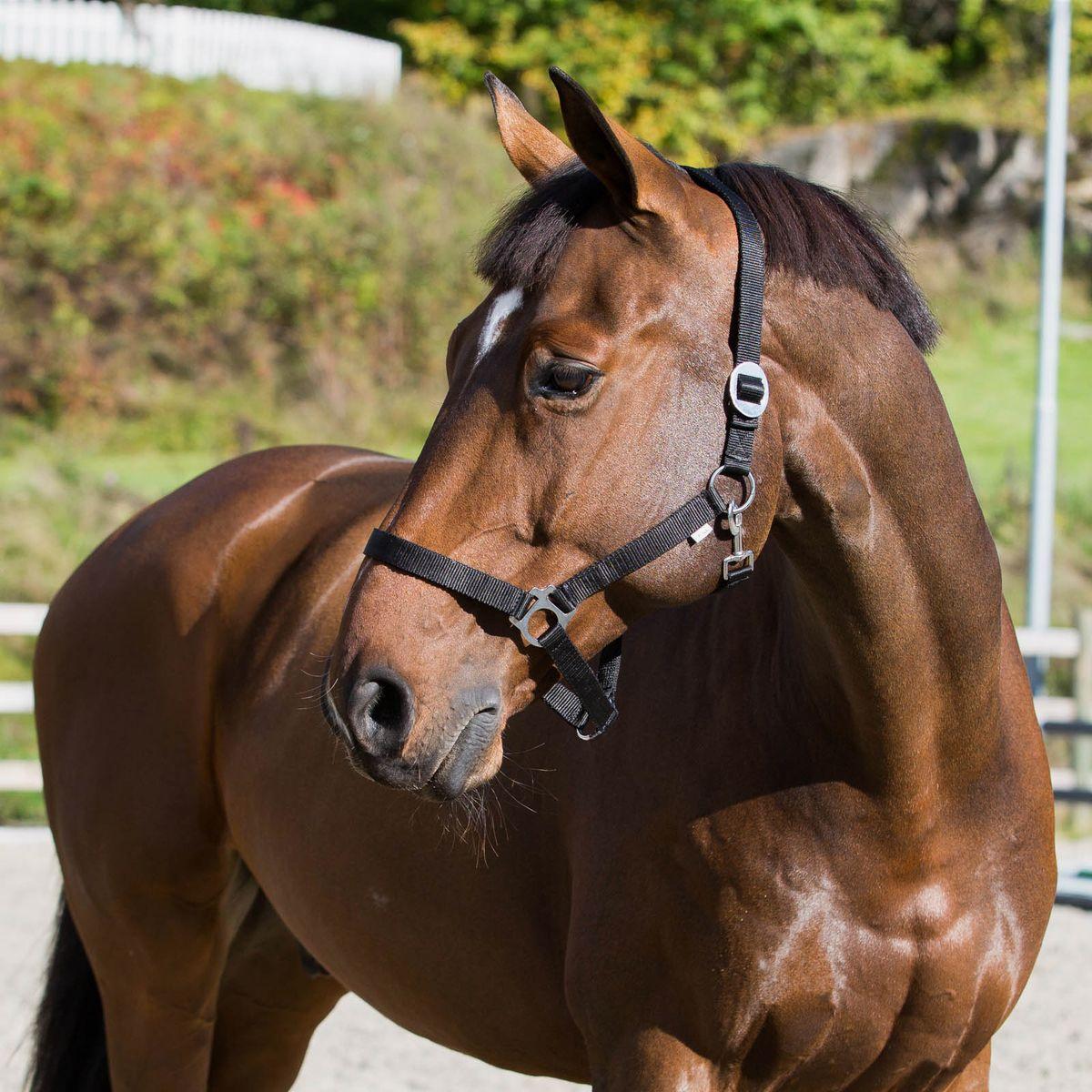 Anvend en grime til træning fra jorden, folden og håndtering af hesten