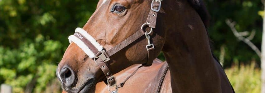 Grimer til heste