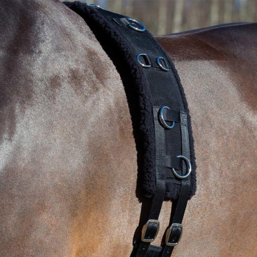 Brun hest med longegjord