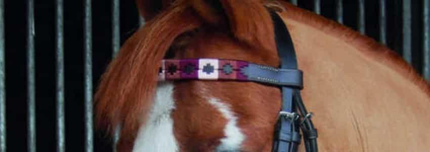 Brunt pandebånd til hest