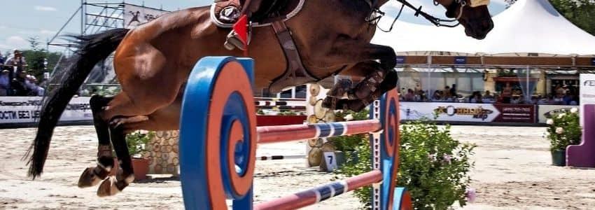 Hest i spring med brune springgamacher