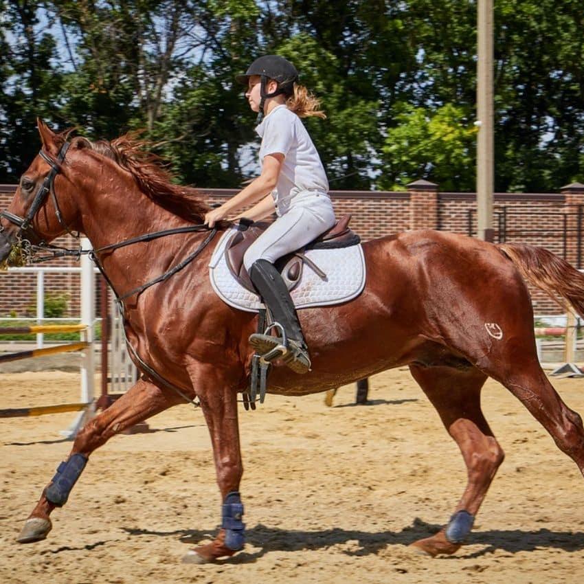 Brun hest i tølt