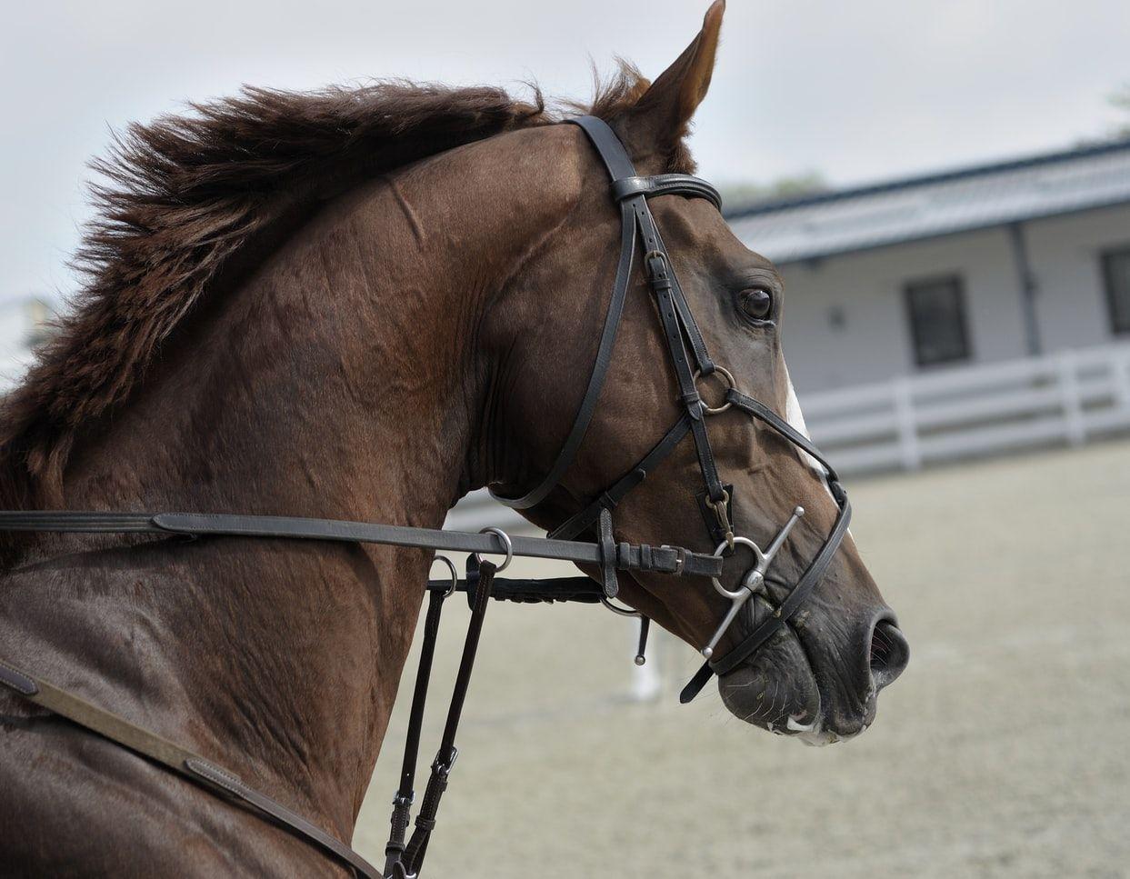 Trenser skaber kontakt mellem rytter og hest, og hjælper med at styre hestens bevægelser.